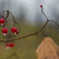 После осеннего дождя :: Александр Мезенцев