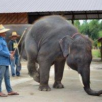 Очень грустный слон :: Владимир Анакин