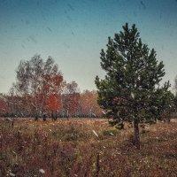 Первый снег :: Алина Репко