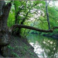 В Куйбышевском лесу :: оксана косатенко