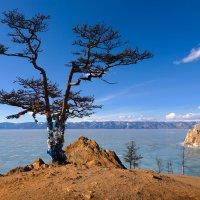 Священное дерево на берегу озера :: Анатолий Иргл