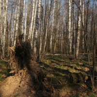 По лесным тропинкам. :: Лена Минакова