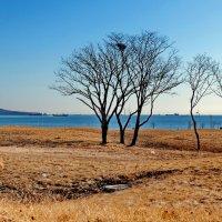 Остров. Ранняя весна 3 :: Ingwar