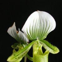 Офисный цветок :: Lukum