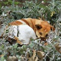 Собака на сене :: Геннадий Валеев