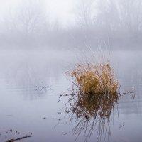 В сиреневой дымке тумана :: Елена Пономарева