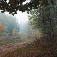 Осенние туманы :: Сергей Шабуневич