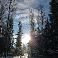Солнце в лесу... :: Алёнушка Е.