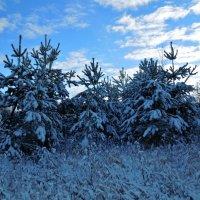 В зимнем лесу... :: Алёнушка Е.