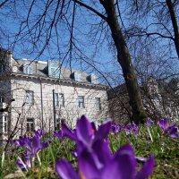 Весна в городе. :: Galina Dzubina