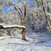 Зимняя картинка в марте :: Милешкин Владимир Алексеевич