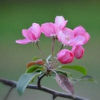 Сады весной прекрасны! :: Ольга Русанова (olg-rusanowa2010)