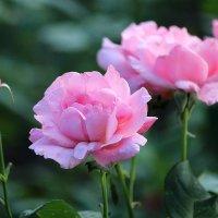 В саду :: И.В.К. ))