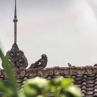 птицы на Бали1 :: Александр