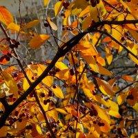 Осенние плоды... :: Владимир Бровко