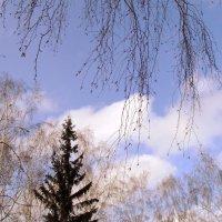 Мартовское небо. :: Мила Бовкун