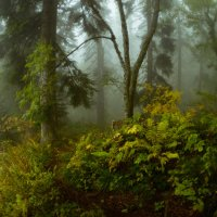 Туманы осеннего леса :: Александр Плеханов