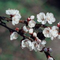 весна пришла :: Виктория Дмитриева