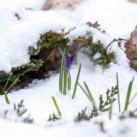 Как же хочется весны и тепла :: Оксана