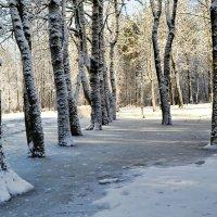 То тепло, то холодно-это март! :: Милешкин Владимир Алексеевич