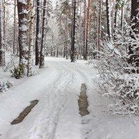 Когда февраль приходит в гости к марту.... :: Лесо-Вед (Баранов)
