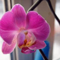 Орхидея :: Кристина Щукина