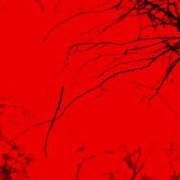 В красном цвете :: mikkoru(Михаил Козлов)