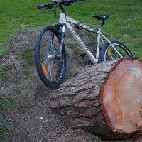 Маленькая трагедия большого дерева :: Руслан Сасонов