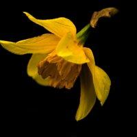 Мой дорогой цветок :: Юлия Ярош