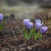 весна пришла! :: Анна Ефимова