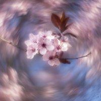 От весны голова кружится :: Olga Verenich
