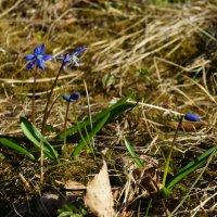 Признаки весны :: Vladimir