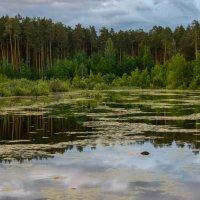 Лесное озеро :: Александр
