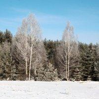 Зима вернулась в марте :: Николай Масляев