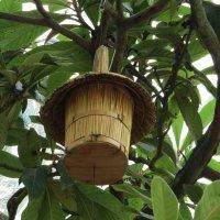 Птичий домик :: Вера Щукина