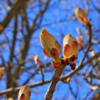 Весна.... :: Mari Kush