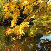 Осеннее золото над водой :: Alexander