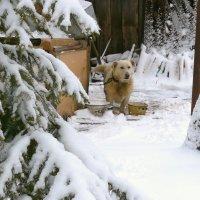 зима вернулась :: Леонид Натапов