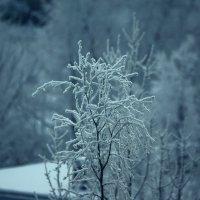 Снежный Питер :: Дмитрий Редьков