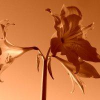 Весна :: Валерия Яскович