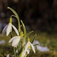 Весны мгновения :: Татьяна Ивановна