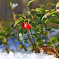 Весна – пора возрождения... :: Mari Kush