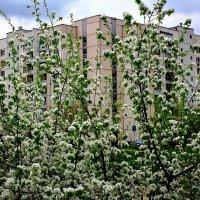 Весна в Марьино. :: Валерий Гудков