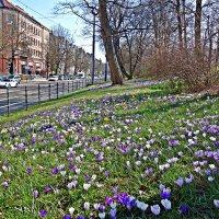 """Весна!!!!""""..Весенний день горяч и золот, – Весь город солнцем ослеплен!...""""И.Северянин :: Galina Dzubina"""