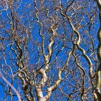 Непонятное дерево :: Елена Васильева