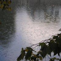 Дождь :: Булаткина Светлана