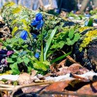 Цвет весны.. :: Юрий Стародубцев