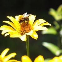 пчелка :: prokyl