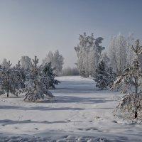 Зимний лес :: Konstantin S