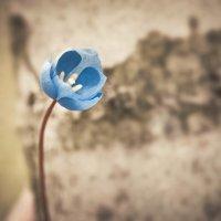 цветок :: Эдуард Куклин